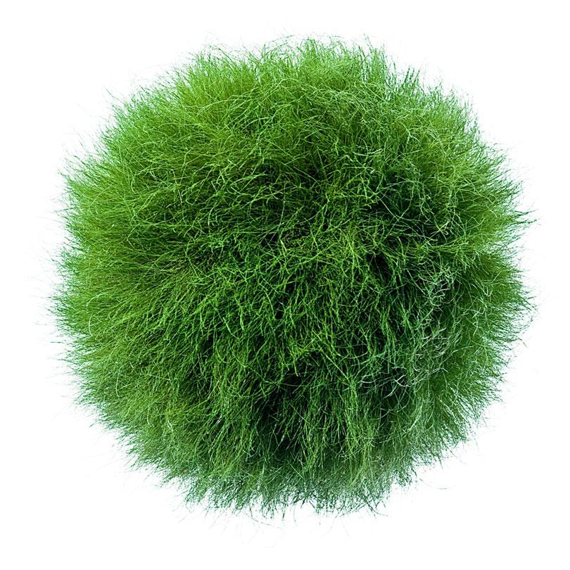 Graskugel aus echtem Gras