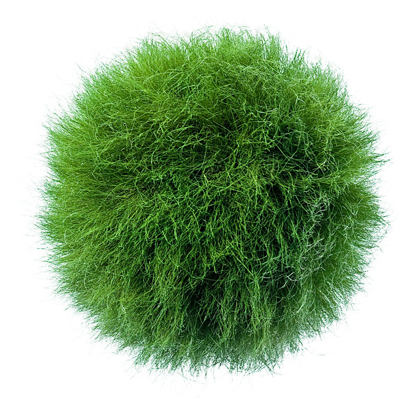 Large hanging grass ball