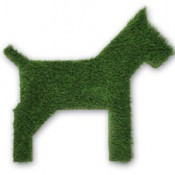 Grass dog by grassland