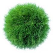Graskugel von grassland