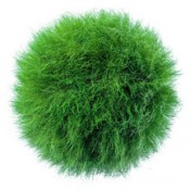 Grass Ball by grassland