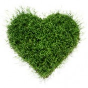 Grass heart by grassland