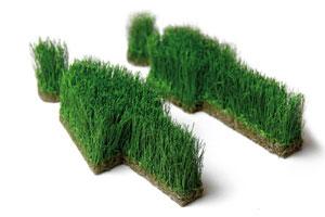 WC Männchen von grassland